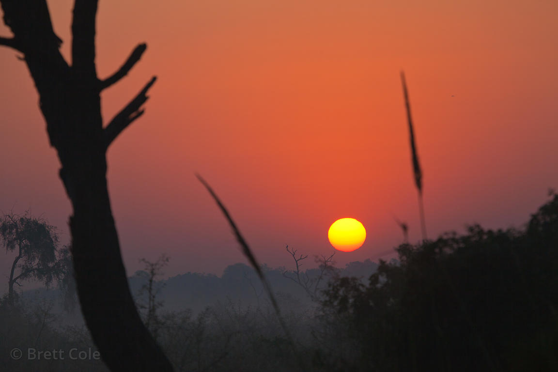 Sunrise over Keoladeo National Park, Bharatpur, India