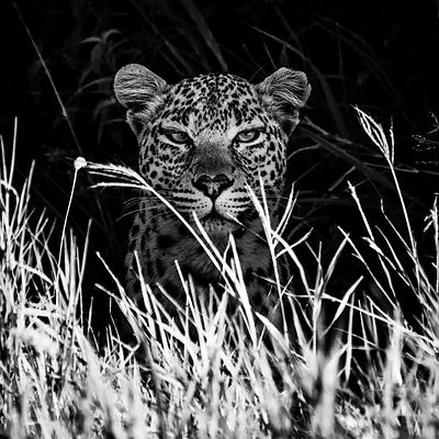 02238-In_front_of_the_leopard_Tanzania_2018_Laurent_Baheux