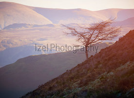 Warm sunlight creeping over a mountain ridge onto a lone bare tree on a slope of the Derwent Fells in the English Lake Distri...