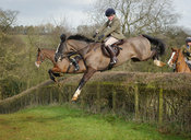 Lexi Taylor jumping a hedge