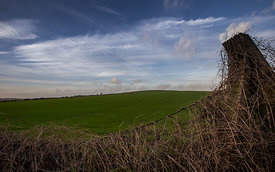 Greeen_Fields_LittleHampton_2015_123