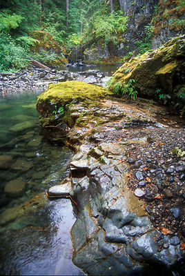 A lush, mossy stretch of Wild and Scenic Quartzville Creek in the Oregon Cascades.
