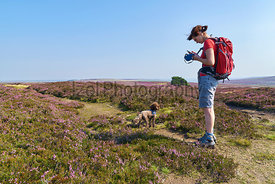 A hiker walking their dog in the English Countryside