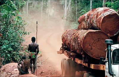Deforestation in the forest of Lobaye territory of the Aka Pygmies, Republic of Central Africa. A logging truck and its cargo...