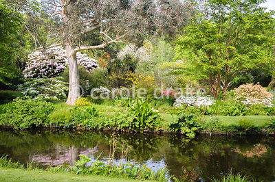 The River Vartry runs through the gardens animating it with movement and light as well as wildlife.Trees and shrubs on its ba...