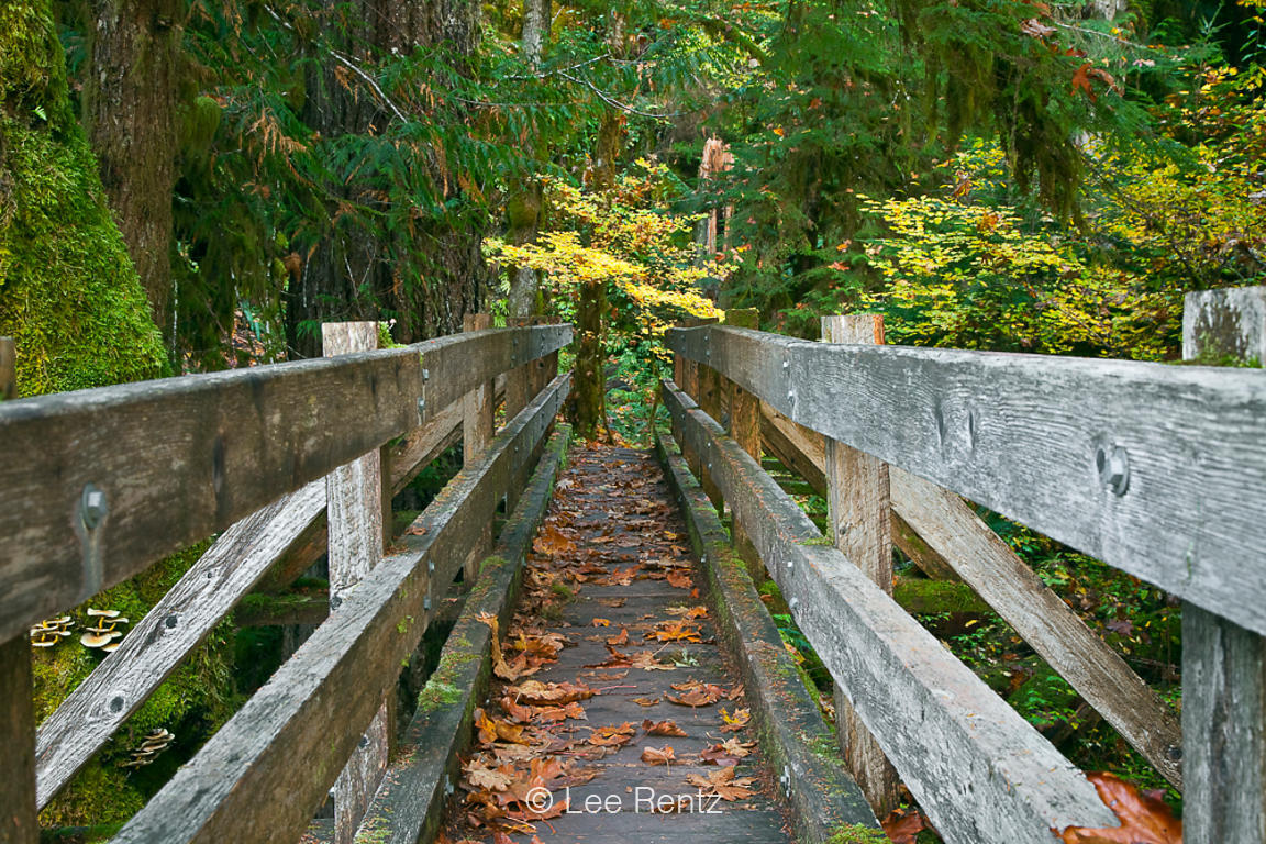 Footbridge over Elk Creek in Olympic National Park