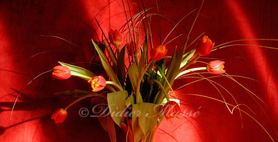 Bouquet de tulipes 2 Ennery Val d'Oise 04/2/12