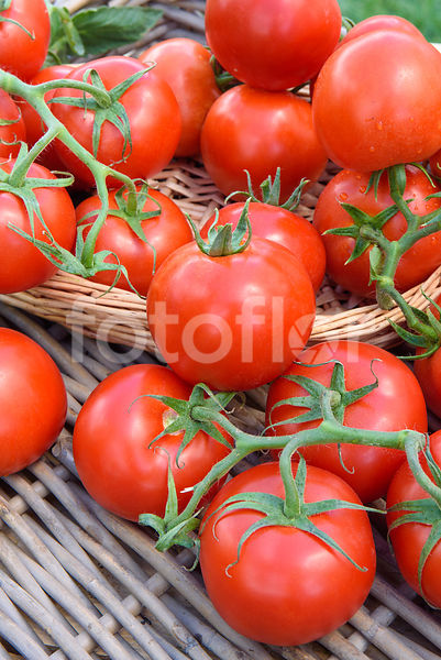 Lycopersicon esculentum 'Monika', tomate, rouge
