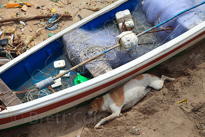 A stray dog sleeps on the sand near a fishing boat, Chowpatty Beach, Mumbai, India.