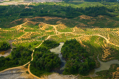 Aerial view of palm oil plantation on deforested land, Sabah, Borneo, Malaysia. 2007