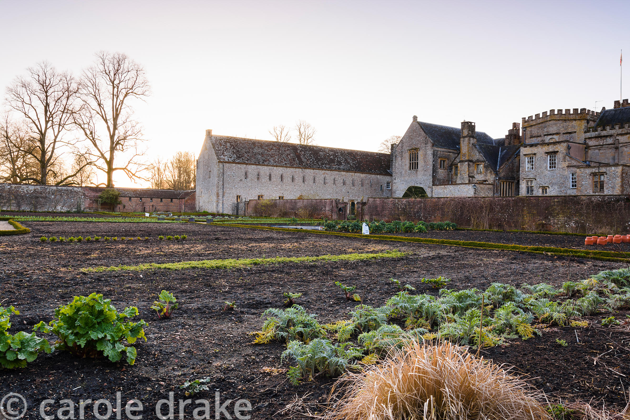 The kitchen garden at Forde Abbey in April with rows of artichokes in the foreground