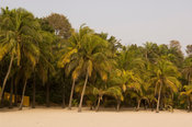 Palm-lined beach, Cap Skiring, Casamance, Senegal