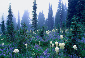 LAND WHERE THE BEARGRASS BLOOMS