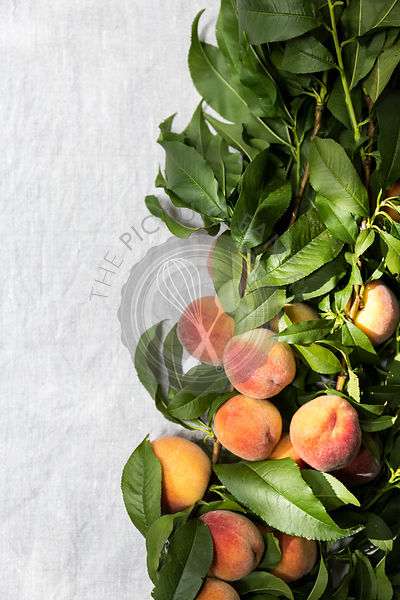 Freshly picked peaches