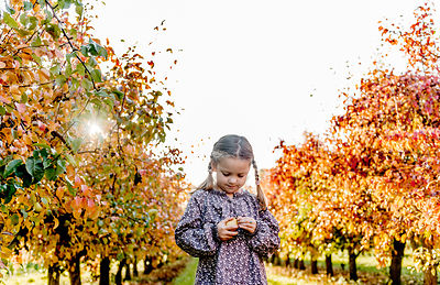 Younger Nordic girl and pear trees 6