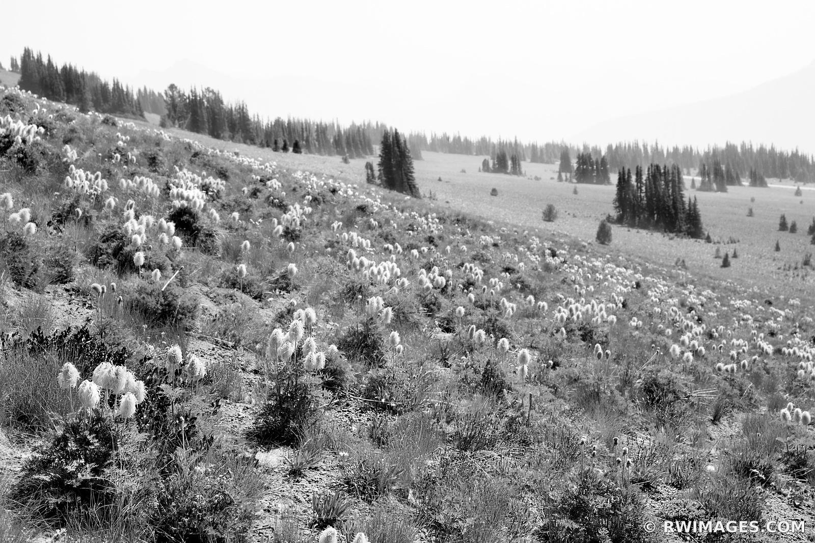 ALPINE MEADOW SUMMER WILDFLOWERS MOUNT RAINIER WASHINGTON BLACK AND WHITE