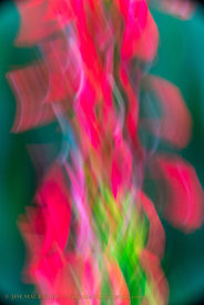 Cardinal Flower In Motion 2