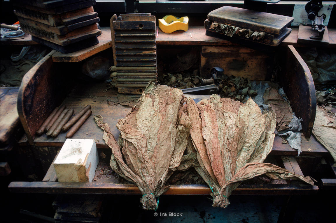 cigar tobacco production