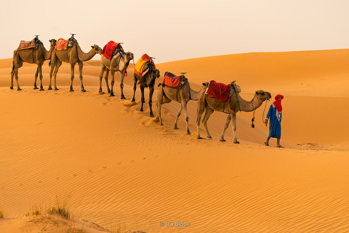 Camels in the sand dunes of Erg Chebbi in Sahara Desert, Morocco