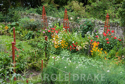 View down onto decorative veg patch and ornamental border full of vividly coloured annuals and perennials, interspersed with ...