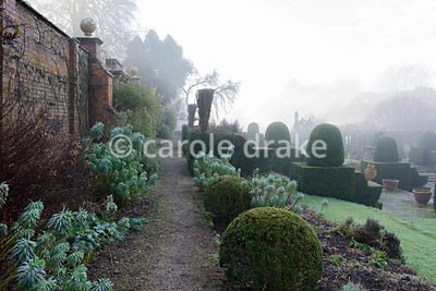 Path along the side of the Fountain Court on a winter's morning framed with euphorbias and clipped box at Mapperton, Dorset