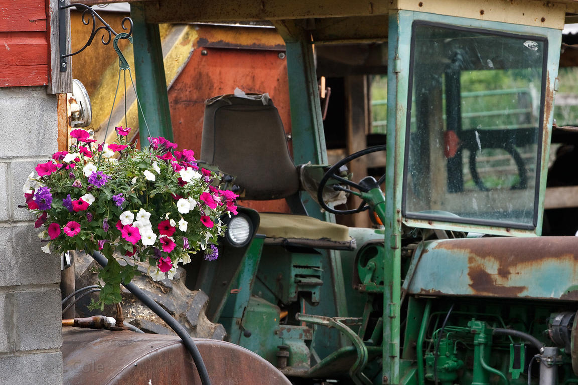 Flowers and tractors on a farm in Rochester, Shawangunks, New York