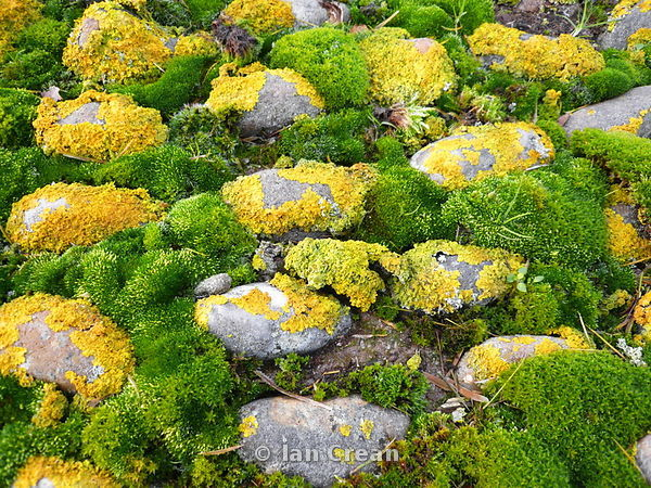 Yellow and Green Mosses