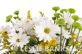 White Daisies and Mums