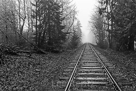 STEEL RAILS IN DAMP WOODS
