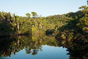 Forested waterways, Sainte Luce Bay, Madagascar