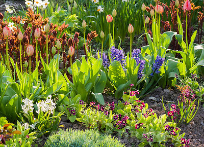 Rows of flowering plants in the cutting garden, incuding tulips, narcissi and peonies. Brilley Court Farm, Whitney-on-Wye, He...