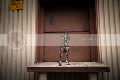 curious brown roan dog standing on urban warehouse platform