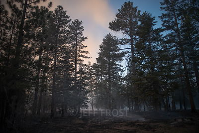 20150618_Lake_Fire_Behind_Trees_D2N-1001