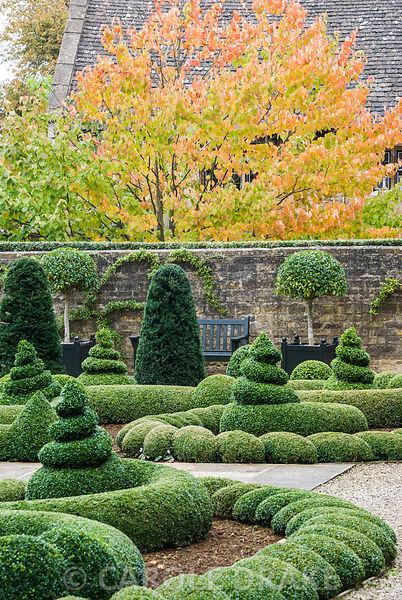Clipped box and yew in the Parterre Garden with standard laurels in Versailles planters framing a bench below orange tints of...