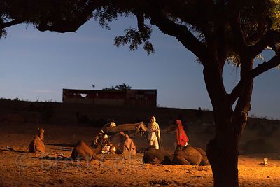 Pre-dawn view of a campsite on a hill at the Pushkar Camel Mela, Pushkar, Rajasthan, India.