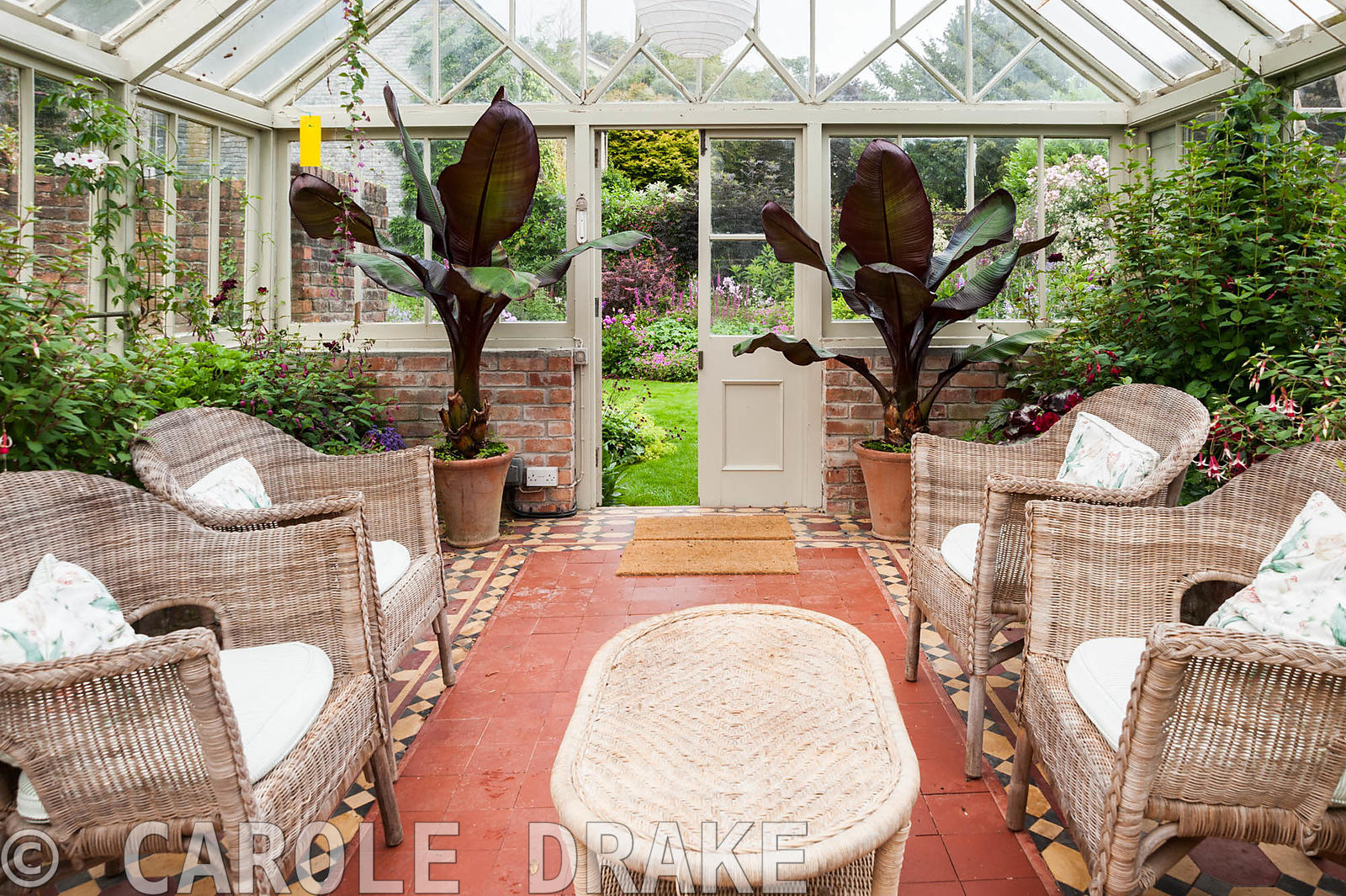 Victorian conservatory with wicker furniture surrounded by lush plants including pelargoniums, begonias, fuchsias and bananas...