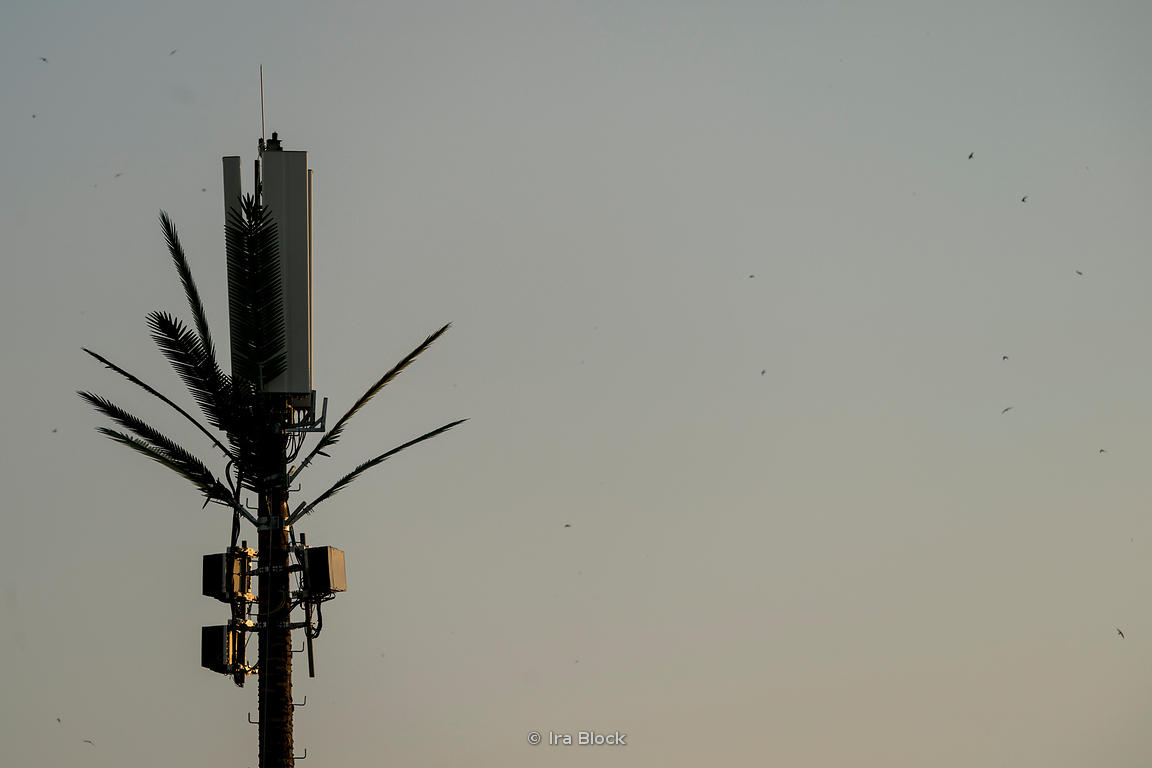 A cell tower decorated with branches of a tree in Fes, Morocco.