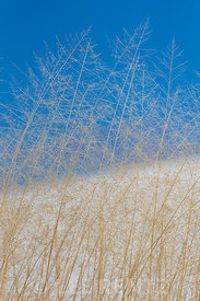 Intricate Grasses on the Dunes in White Sands National Monument