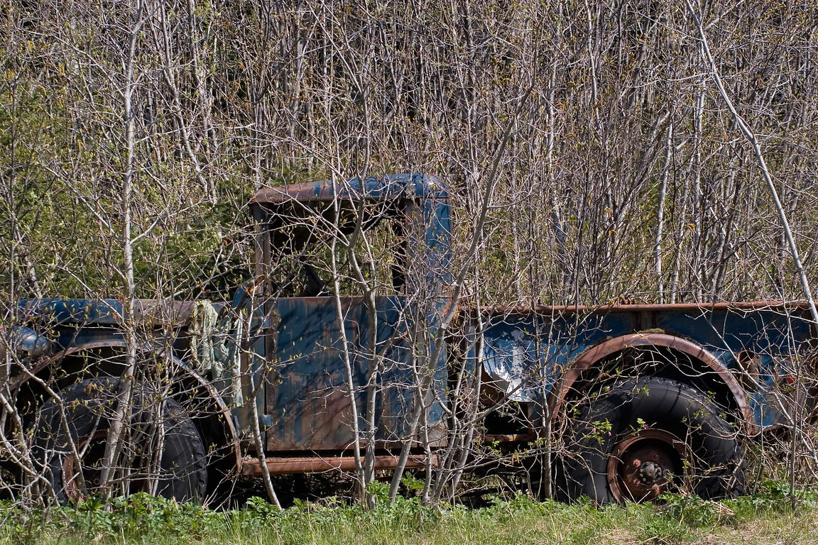 Old truck being overtaken by forest, Yakataga, Lost Coast, Alaska