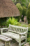 Lichen encrusted wooden bench with Thatched Garden beyond featuring fastigiate yews, Taxus baccata Aurea Group, around large ...