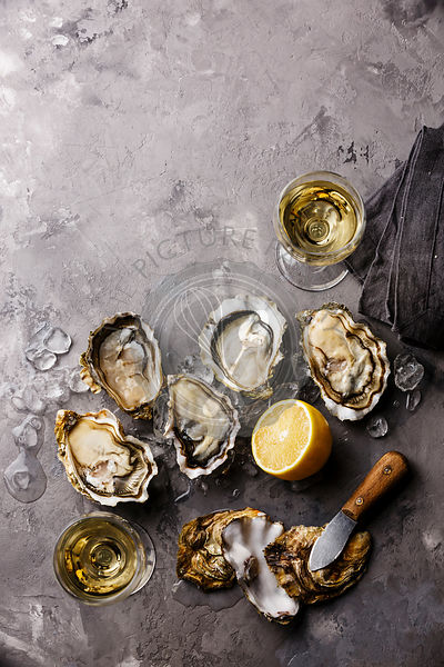 Opened Oysters Fines de Claire and white wine on gray concrete texture background copy space