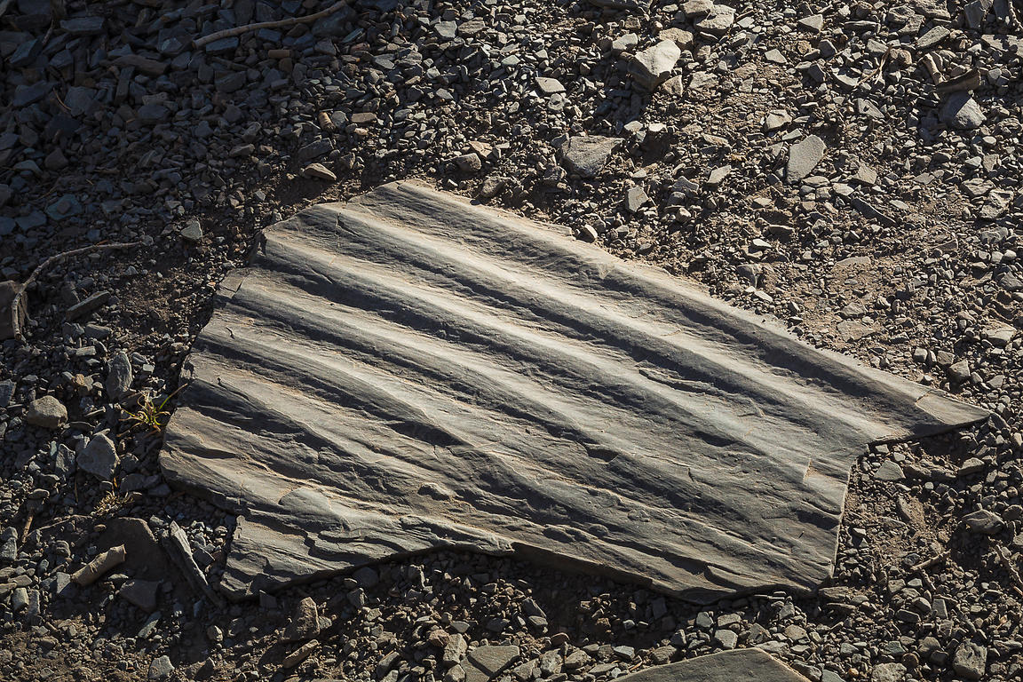 Rippled Stone in Great Basin National Park