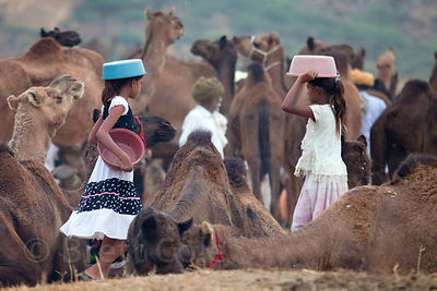 Two girls collect camel dung for fire fuel, Pushkar, Rajasthan, India