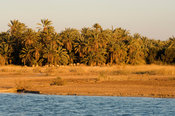 palm trees at lake Siwa, the Great Sand Sea, Western desert, Siwa oasis, Egypt