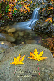 Waterfall and Fall Leaves, Uvas Canyon, Morgan Hill, CA, USA