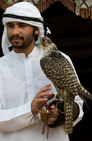 Emirati man with falcon, Sharjah Heritage Days cultural festival, Heritage Area, Sharjah, Emirates