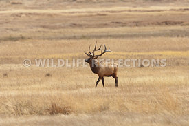 elk_meadow_walk_6