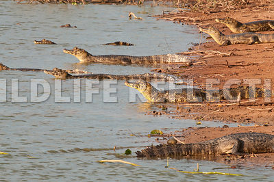 caiman_beach_group09021303