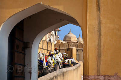 Elephant rides for tourists, Amber Fort, Jaipur, Rajasthan, India