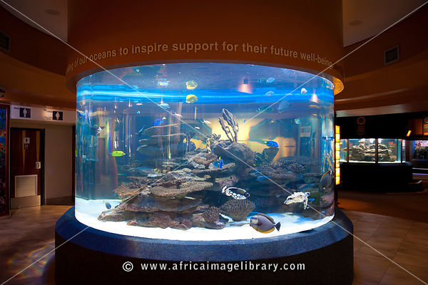 Two Oceans Aquarium, Victoria & Alfred Waterfront, Cape Town, South Africa